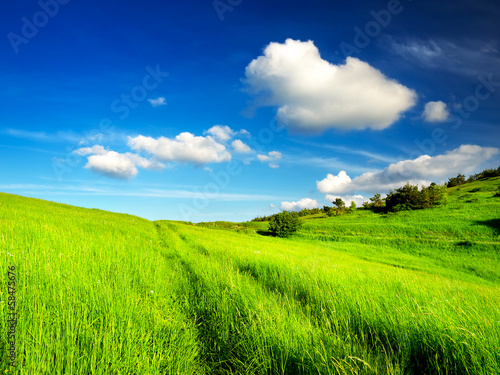 Poster Lime groen Beautiful landscape in the summer time.