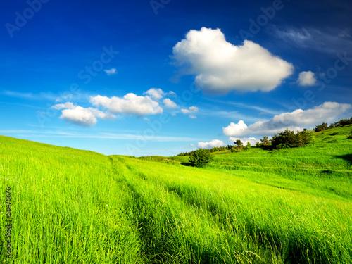 In de dag Lime groen Beautiful landscape in the summer time.