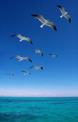 Panel Szklany Podświetlane Do łazienki Various seagulls flying over a blue sea