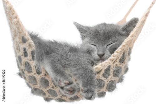 Keuken foto achterwand Kat Cute gray kitten lying in hammock