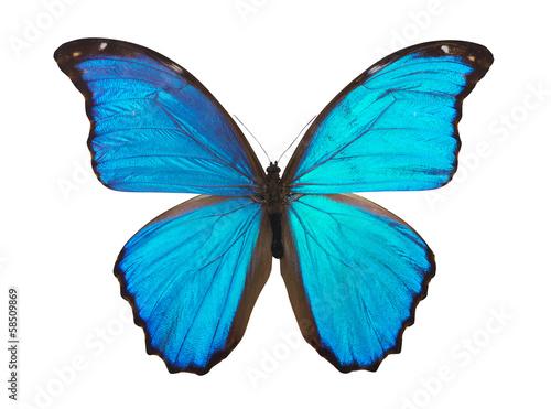 Fotografie, Obraz  Butterfly morpho