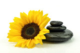 Fototapeta Kamienie - Słonecznik z kamieniami do spa