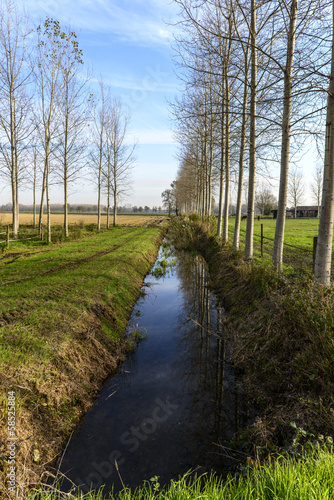Deurstickers Noord Europa Irrigation channel with poplars (Zerbolo, North Italy)