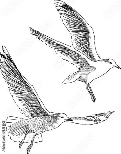 flying sea gulls Wall mural