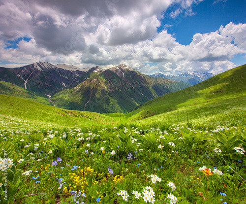 Foto op Plexiglas Lavendel Fields of flowers in the mountains. Georgia, Svaneti.