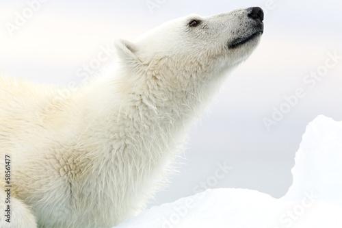Recess Fitting Arctic Svalbard