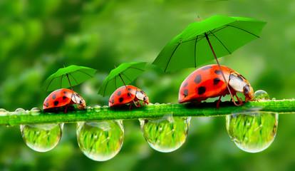 Fototapeta Do gabinetu lekarskiego/szpitala Little ladybugs with umbrella.