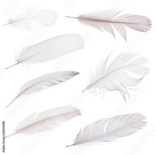 set of seven light grey feathers isolated on white