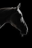 Sylwetka białego konia w cieniu