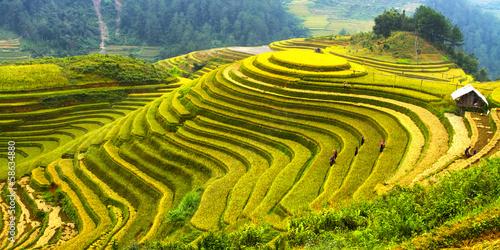 Fotografía  Rice fields Mu Cang Chai, Vietnam