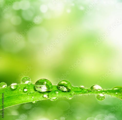 dew drop on a leaf