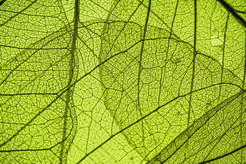green leaf texture - in detail