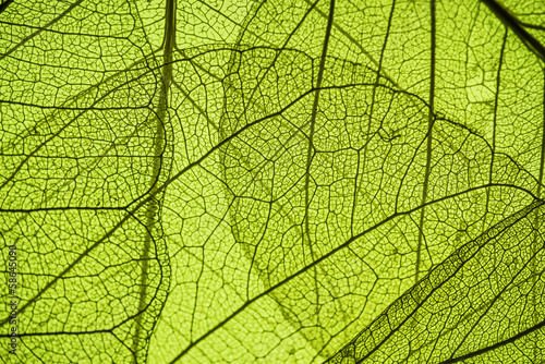 Spoed Foto op Canvas Natuur green leaf texture - in detail