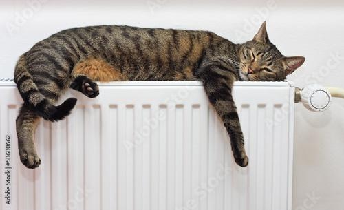 Fotografie, Obraz  A tiger (tabby) cat relaxing on a warm radiator