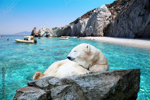 Ice bear on a beautiful beach