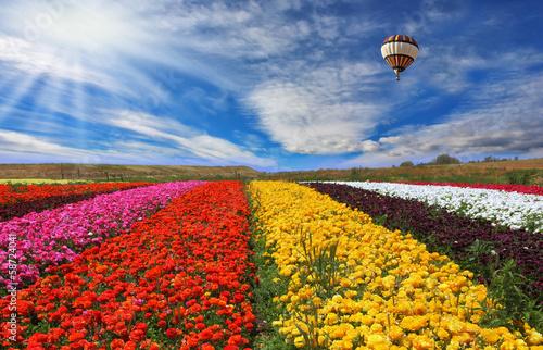 In de dag Ballon The rural fields with flowers