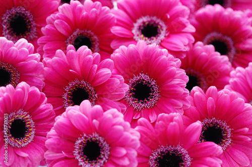 Fotografia, Obraz pink gerbera