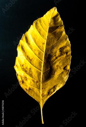 liść - fototapety na wymiar