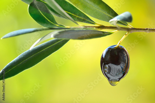 Tuinposter Olijfboom Olive with oil drop closeup, concept of fresh olive oil