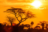 Fototapeta Sawanna - Orange glow of an african sunset