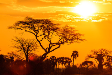 Orange glow of an african sunset