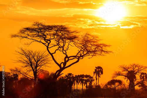 Door stickers Africa Orange glow of an african sunset