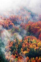 Fototapetaaerial view of forest in autumn with fog and vivid colors
