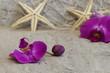 Orchideen mit Seesternen