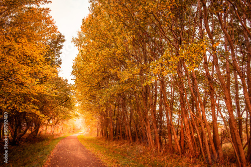 Fototapety, obrazy: Autumn landscape