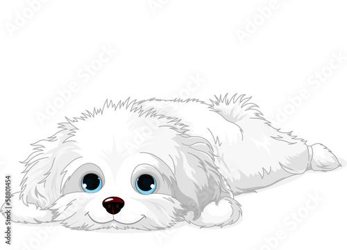 Canvastavla White Puppy
