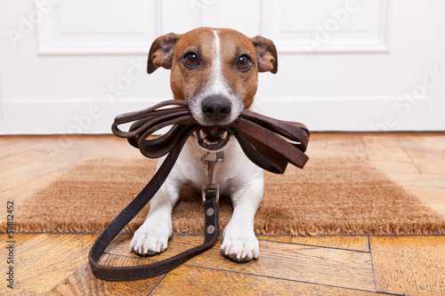 Photo Stands Crazy dog dog leather leash