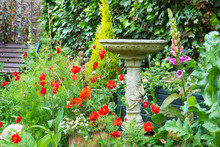 Summer Bedding Flowers With Decorative Stone Bird Bath