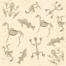 Animals Anatomy, Skeleton  Archeology Biology  Pattern