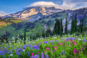 Panel Szklany Krajobraz Mt Rainier wildflowers