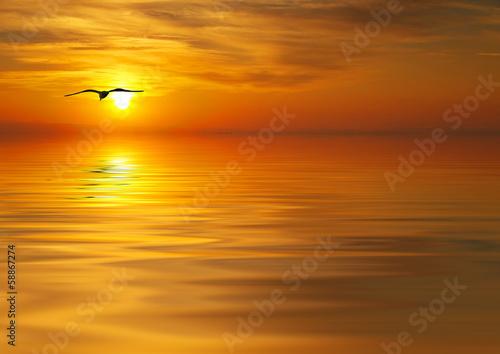 Papiers peints Morning Glory en busca de la puesta de sol