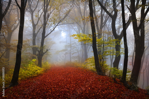 Fairytale foggy forest for child and fantasy books - 58880013