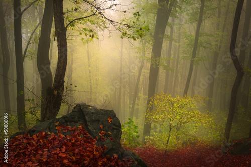 Printed kitchen splashbacks Brown Fairytale foggy forest for child and fantasy books