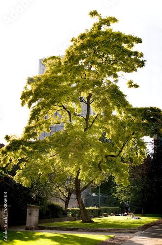 Photo city tree
