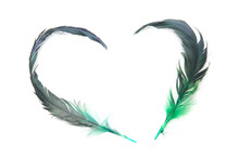 Feather Of Love