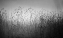 Fall Stress Melancholy Old Grass