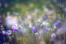 Wildflowers, Spring, Summer, S...