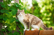 Tricolor Cat Standing On The Fence