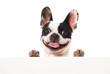 canvas print picture - Französische Bulldogge