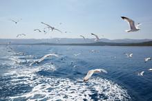 Seagulls Against Sea And Sky