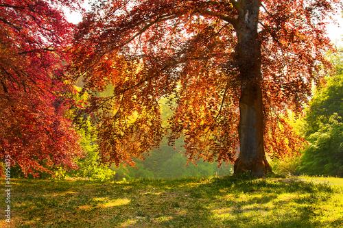 Keuken foto achterwand Rood traf. Beautiful autumn trees.