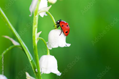 Photographie Ladybug est assis sur une fleur