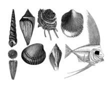 8 Prehistoric Fossils