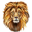 canvas print picture - lion head in front