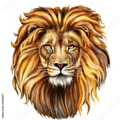 Photographie  Tête de lion devant