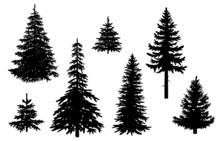 Set Mit Nadelbäumen, Vektor U...